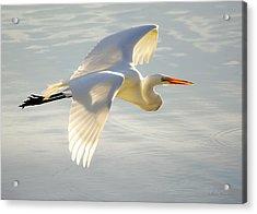 Great Egret Glow Acrylic Print