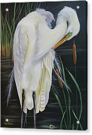 Great Egret In A Cattail Pond Acrylic Print