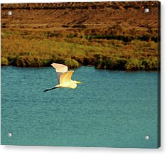 Acrylic Print featuring the digital art Great Egret In Flight by Timothy Bulone