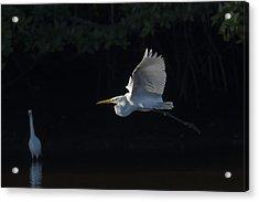 Great Egret In Morning Flight Acrylic Print