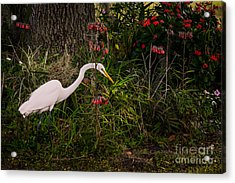 Great Egret In The Garden Acrylic Print by Zina Stromberg