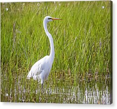 Acrylic Print featuring the photograph Great Egret In The Spring  by Ricky L Jones