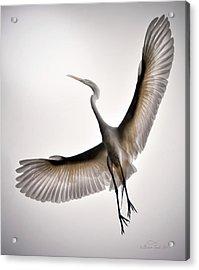 Great Egret Majesty Acrylic Print