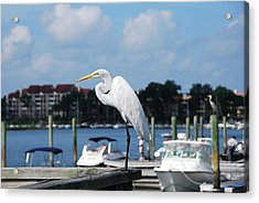 Great Egret Acrylic Print by Margaret Palmer