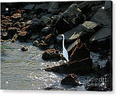 Acrylic Print featuring the photograph Great Egret On Sunny Seaside Rocks by Susan Wiedmann