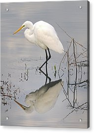 Great Egret Reflected Acrylic Print by Brian Grant
