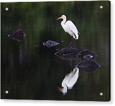 Great Egret Reflection Acrylic Print