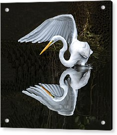 Great Egret Reflection Acrylic Print