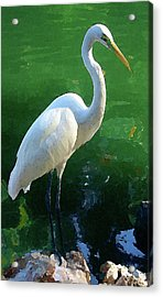 Acrylic Print featuring the digital art Great Egret by Timothy Bulone