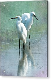 Great Egrets Acrylic Print by Betty LaRue