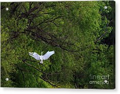 Great Egrets In The Shore Acrylic Print