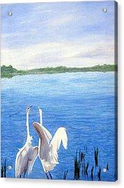 Great Egrets Acrylic Print by Lauretta Cole Larsen