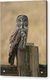 Great Gray Owl Acrylic Print by Doug Herr