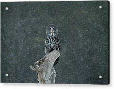 Great Gray Owl In Snowstorm Acrylic Print