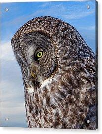 Great Gray Owl Acrylic Print by TL Mair