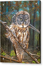 Great Grey Owl 2 Acrylic Print