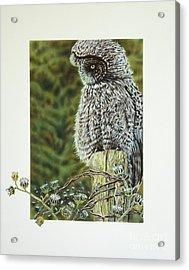 Great Grey Owl Acrylic Print by Greg and Linda Halom