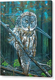 Great Grey Owl Acrylic Print by Sharon Duguay