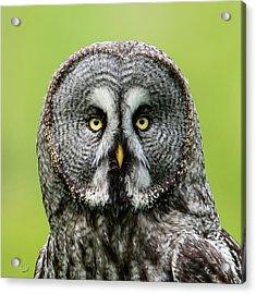 Great Grey's Portrait Closeup Square Acrylic Print