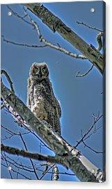 Great Horned Owl Acrylic Print by Alexander Rozinov