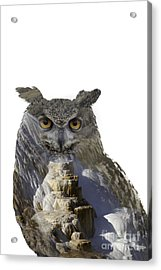 Great Horned Owl And Mammoth Hot Springs Acrylic Print