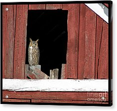 Acrylic Print featuring the photograph Great Horned Owl by Daniel Hebard