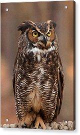 Great Horned Owl Digital Oil Acrylic Print by Chris Flees