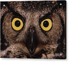 Great Horned Owl Face Acrylic Print by Tony Beck