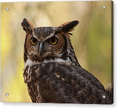 Great Horned Owl In A Tree 1 Acrylic Print by Chris Flees