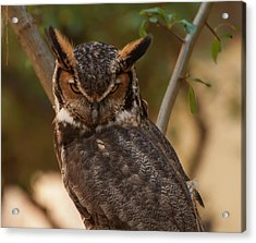Great Horned Owl In A Tree 2 Acrylic Print by Chris Flees