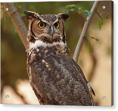 Great Horned Owl In A Tree 3 Acrylic Print by Chris Flees