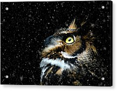 Great Horned Owl In The Snow Acrylic Print