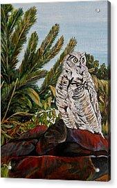 Great Horned Owl - Owl On The Rocks Acrylic Print