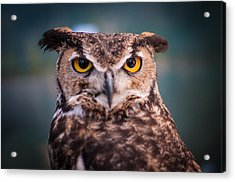 Great Horned Owl Acrylic Print by Ralph Vazquez