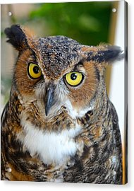 Great Horned Owl  Acrylic Print by Richard Bryce and Family