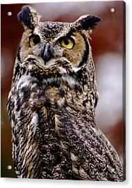 Great Horned Owl Acrylic Print by Sonja Anderson