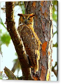 Great Horned Owl Wink Acrylic Print by Barbara Bowen