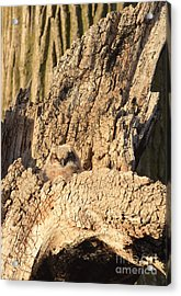 Great Horned Owlet Two Acrylic Print