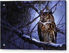 Great Horned Acrylic Print by Ron Jones
