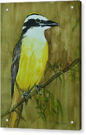 Acrylic Print featuring the painting Great Kiskadee by Betty-Anne McDonald