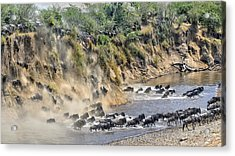 Great Migration Acrylic Print by Hua Zhu
