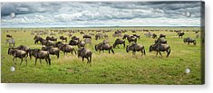 Great Migration In Serengeti Plains Acrylic Print by Kirill Trubitsyn