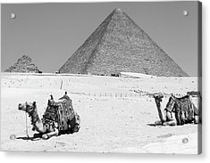 Acrylic Print featuring the photograph great pyramids of Giza by Silvia Bruno