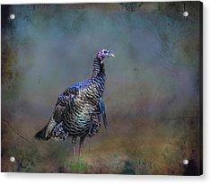 Great Smokey Turkey Acrylic Print