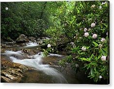 Great Smoky Mountains Rosebay Rhododendron Acrylic Print by Mark VanDyke