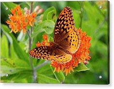 Great Spangled Fritillary I Acrylic Print