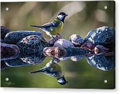 Great Tit On The Stone Acrylic Print