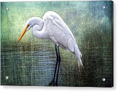 Great White Egret Acrylic Print by Bonnie Barry