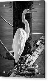 Great White Heron In Black And White Acrylic Print by Garry Gay