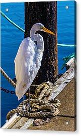 Great White Heron On Boat Dock Acrylic Print